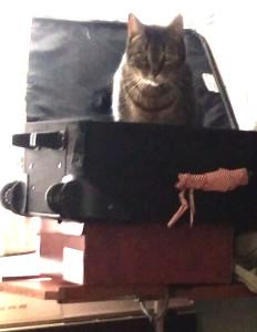 tigger in suitcase